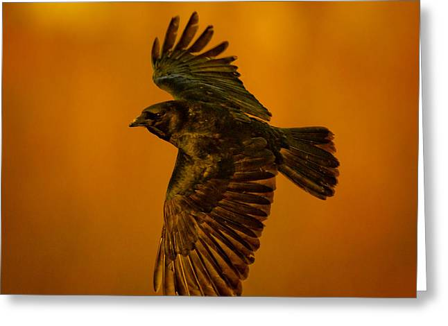 Crow On Gold Greeting Card by Robert Frederick