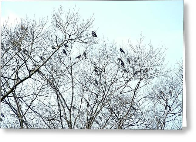 Crow Trees Greeting Card