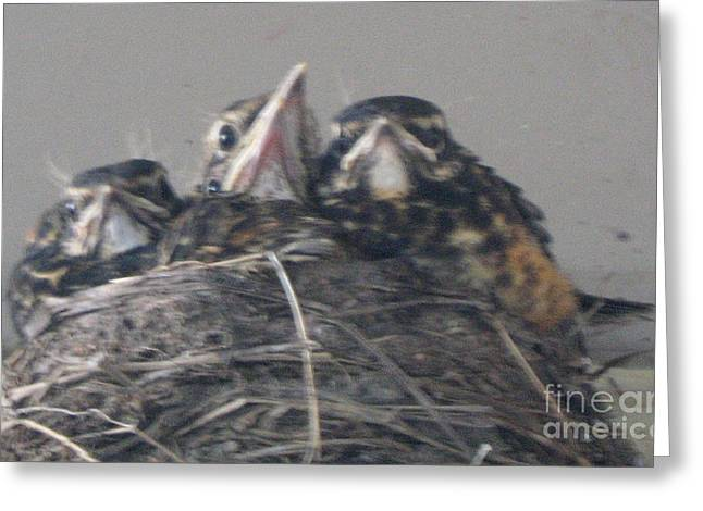 Crowded Nest Greeting Card