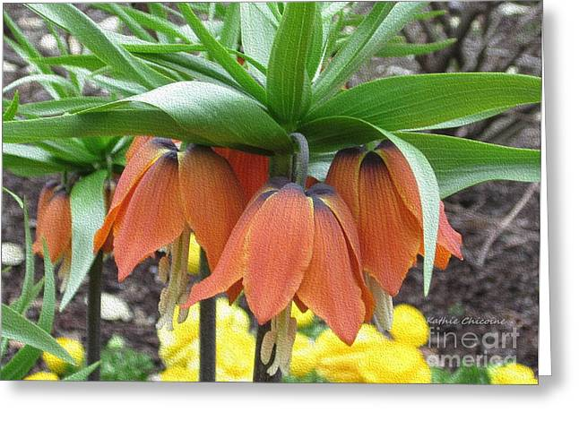 Crown Imperial Fritillaria Greeting Card