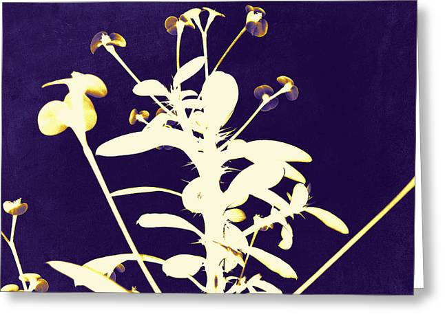 Crown Of Thorns - Indigo Greeting Card by Shawna Rowe