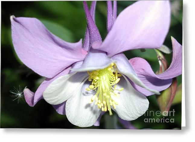 Crowned In Purple Greeting Card