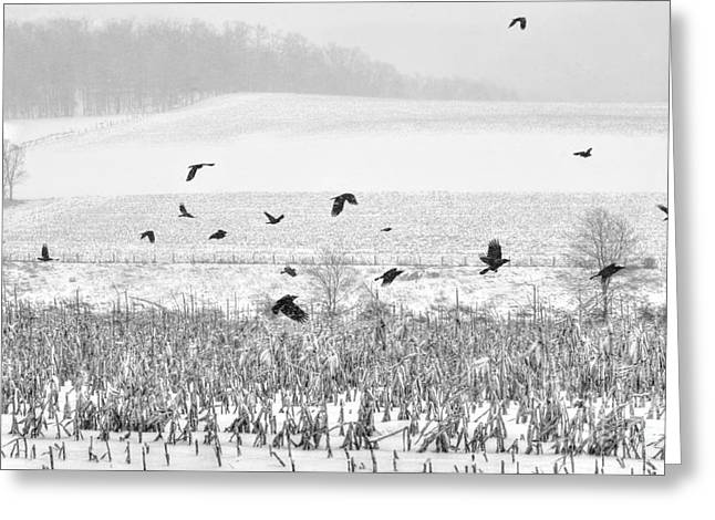 Crows In Cornfield Winter Greeting Card by Dan Friend