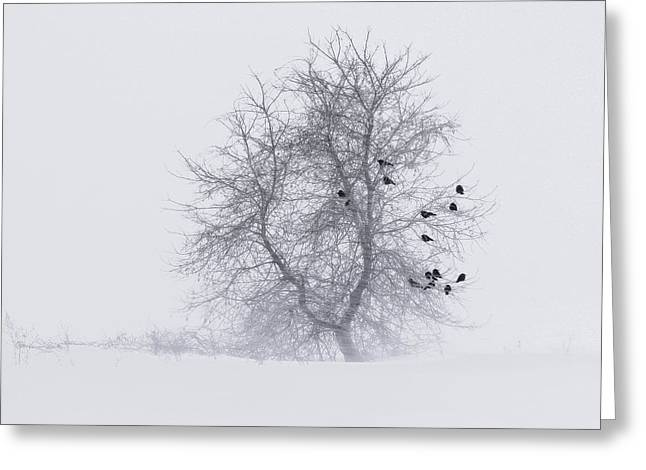Crows On Tree In Winter Snow Storm Greeting Card by Peter v Quenter