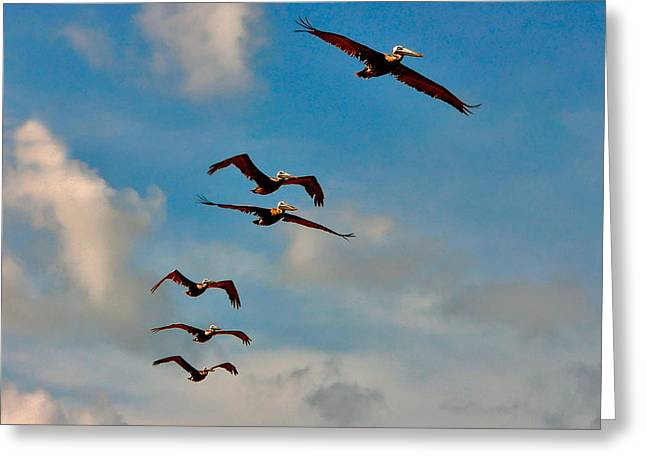Cruising Pelicans. Melbourne Shores. Greeting Card