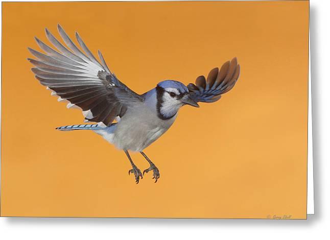 Cruising The Backyard Greeting Card by Gerry Sibell
