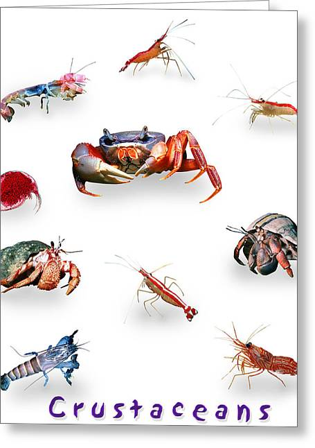 Crustaceans Greeting Card by Wernher Krutein