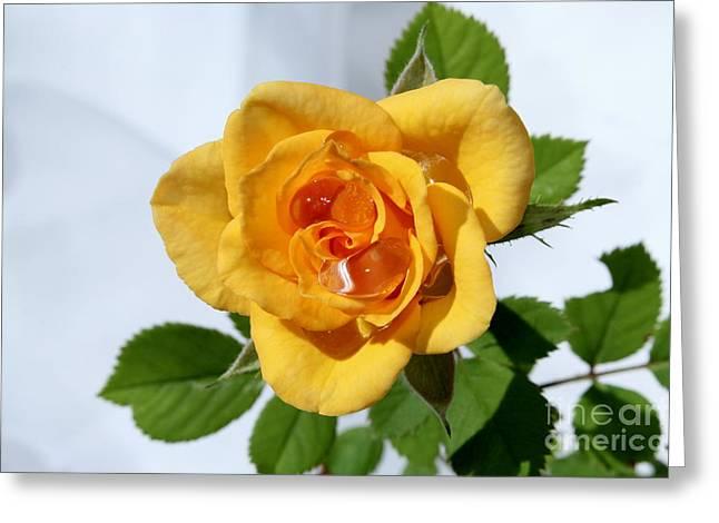 Crying Rose Greeting Card by Krissy Katsimbras