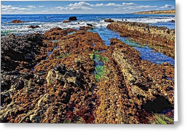 Crystal Cove Tide Pools  Greeting Card by Donna Pagakis