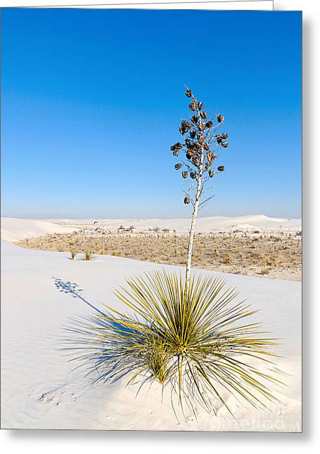 Crystal Dune Tree At White Sands National Monument In New Mexico. Greeting Card by Jamie Pham