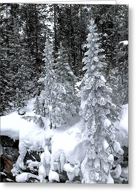 Crystal Trees Of Yellowstone Greeting Card