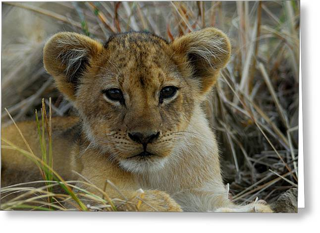 Cub Greeting Card by Stefan Carpenter