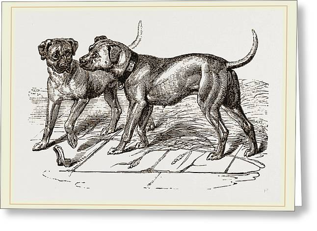 Cuban Blood-hounds Greeting Card