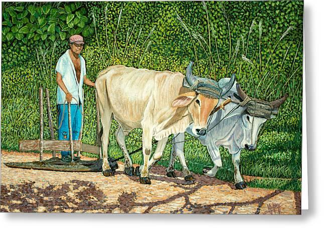 Cuban Countryman Greeting Card by Manuel Lopez