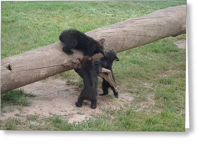 Cubs At Play Greeting Card