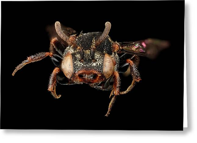 Cuckoo Bee Greeting Card by Us Geological Survey