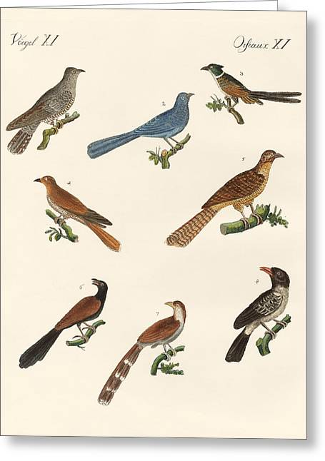 Cuckoos From Various Countries Greeting Card by Splendid Art Prints