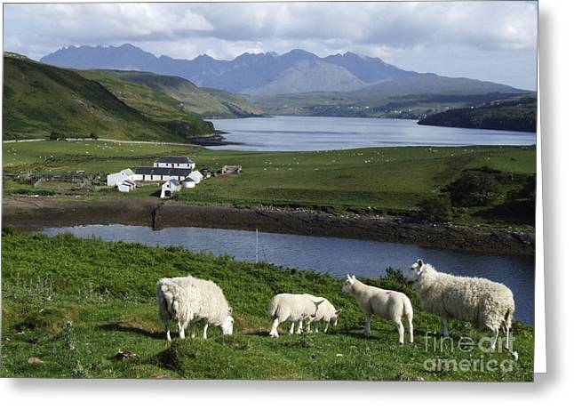 Cuillin Mountains - Isle Of Skye Greeting Card