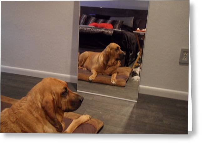 Cujo's Reflection Greeting Card