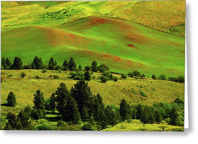 Cultivation Patterns In The Palouse Greeting Card by Michel Hersen