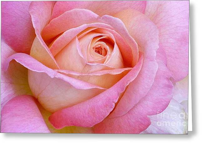 Cupid's Choice Rose Greeting Card by Paul Clinkunbroomer