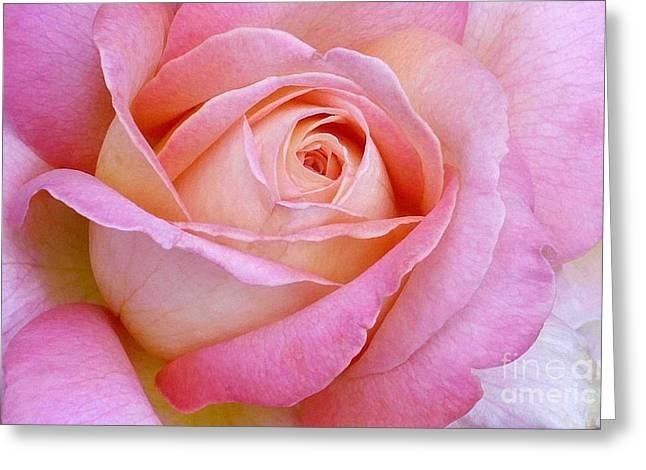 Cupid's Choice Rose Greeting Card