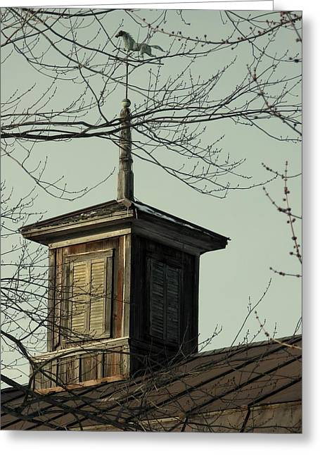 Cupola Through The Trees Greeting Card by Debbie Finley