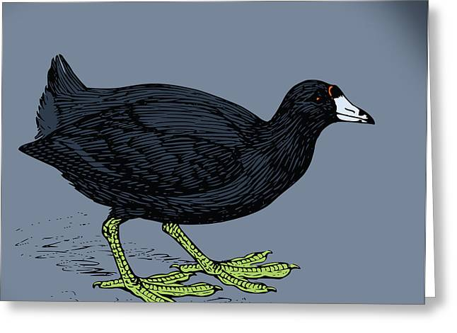 Curious Coot Greeting Card by Viv Griffiths