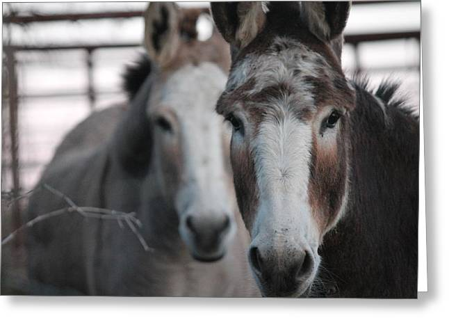 Curious Donkeys Greeting Card by Lorri Crossno