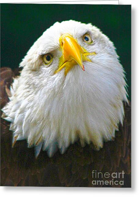 Curious Eagle Greeting Card