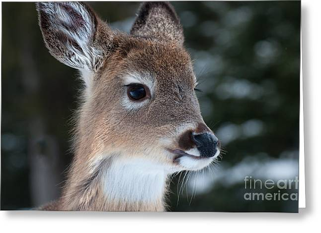 Curious Fawn Greeting Card by Bianca Nadeau