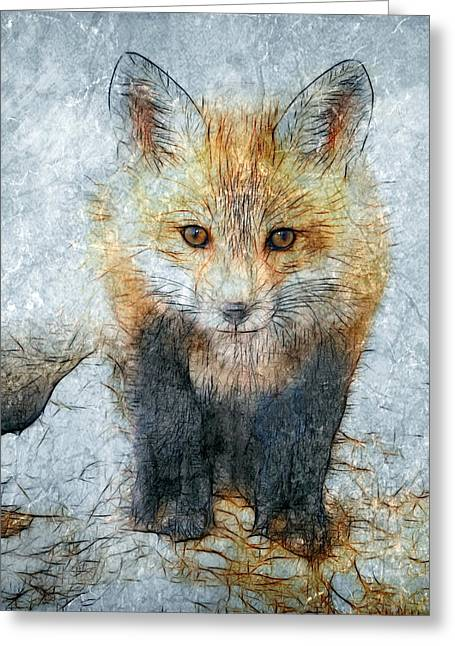Curious Fox Greeting Card by Steve Barge