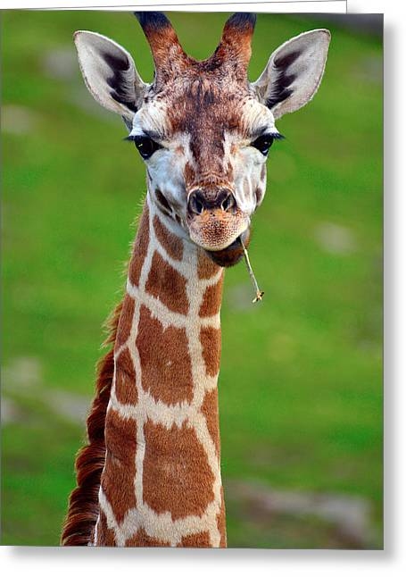Curious Giraffe Greeting Card by Tommytechno Sweden