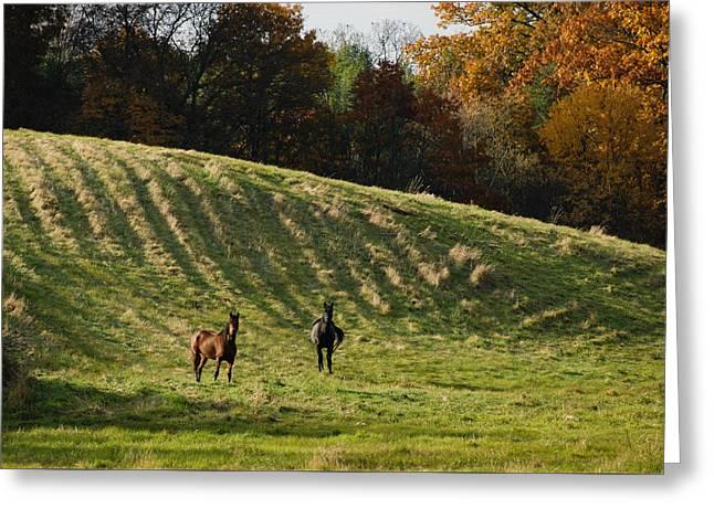 Curious Horses Greeting Card