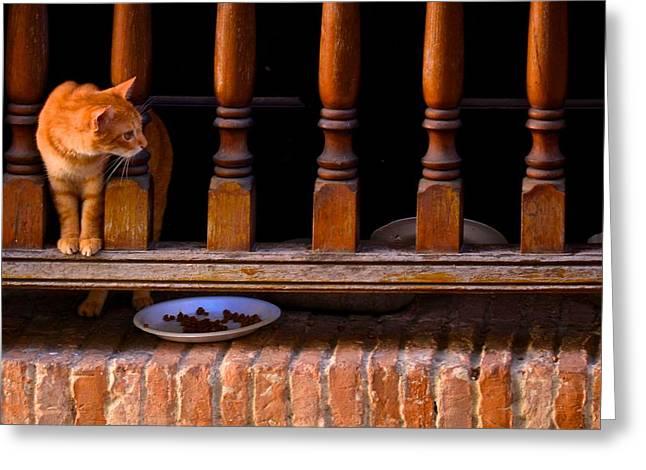 Curious Kitty Greeting Card by Ricardo J Ruiz de Porras