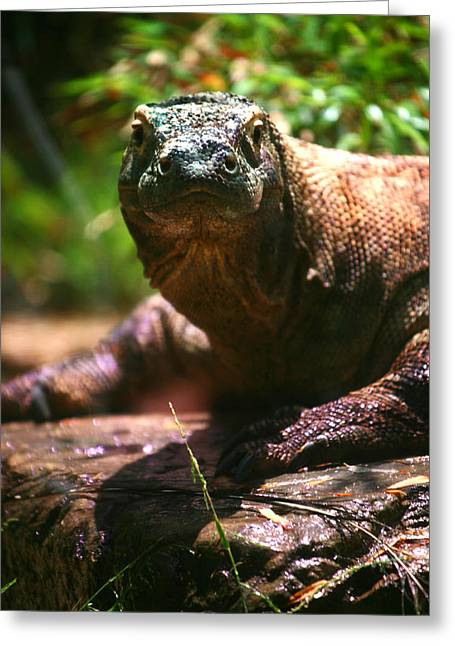 Curious Komodo Greeting Card