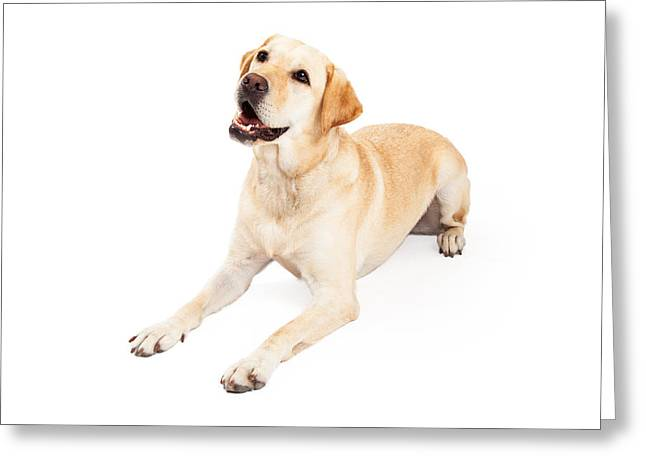 Curious Labrador Retriever Dog Laying At An Angle Greeting Card by Susan Schmitz