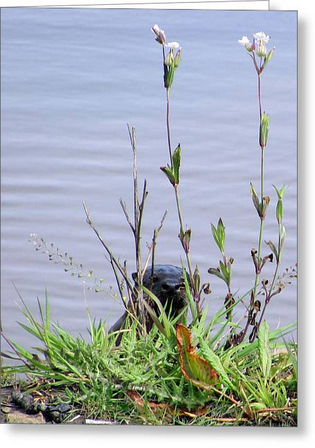 Greeting Card featuring the photograph Curious Otter by I'ina Van Lawick
