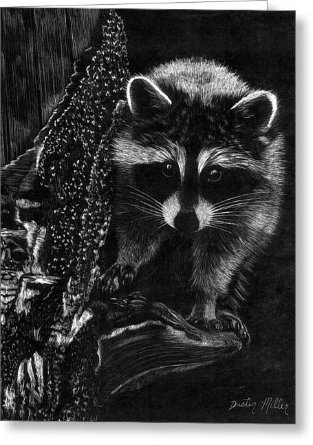 Curious Raccoon Greeting Card by Dustin Miller