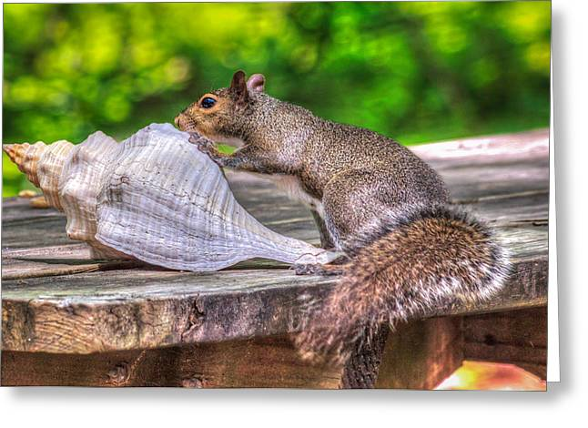 Greeting Card featuring the photograph Curious Squirrel by Rob Sellers