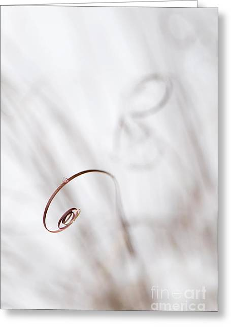 Curl Greeting Card by Anne Gilbert