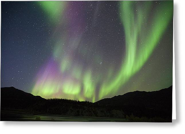 Curtains Of Brightly Colored Aurora Greeting Card by Hugh Rose
