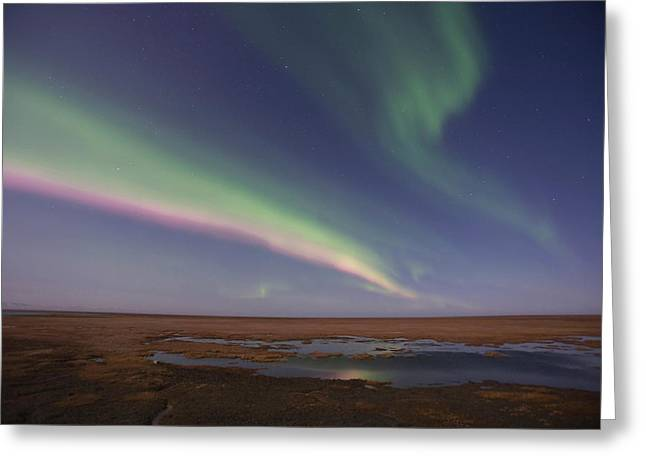 Curtains Of Colored Northern Lights Greeting Card by Hugh Rose