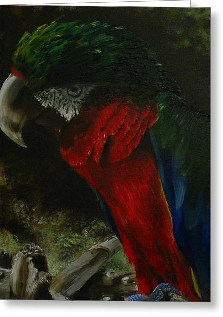 Curtis The Parrot Greeting Card by Sherry Robinson