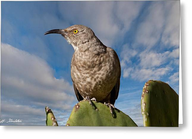 Curve-billed Thrasher On A Prickly Pear Cactus Greeting Card