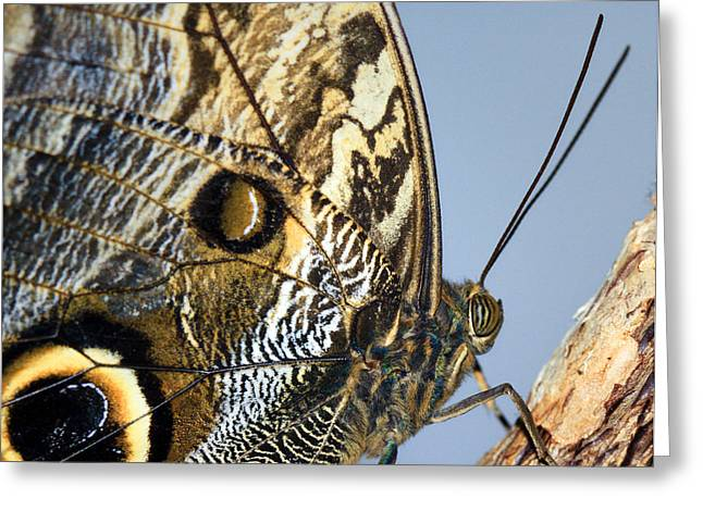Curve Of A Butterfly Greeting Card by Sonya Lang