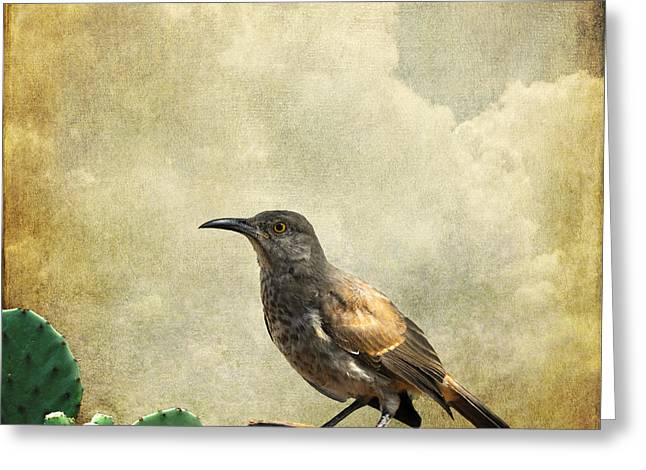 Curved Bill Thrasher Greeting Card