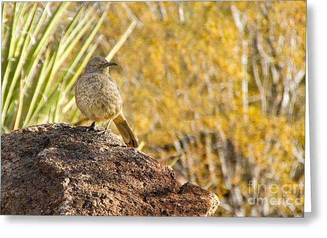 Curved-billed Thrasher Greeting Card by Marianne Jensen
