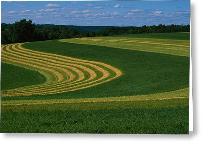 Curving Crops In A Field, Illinois, Usa Greeting Card by Panoramic Images
