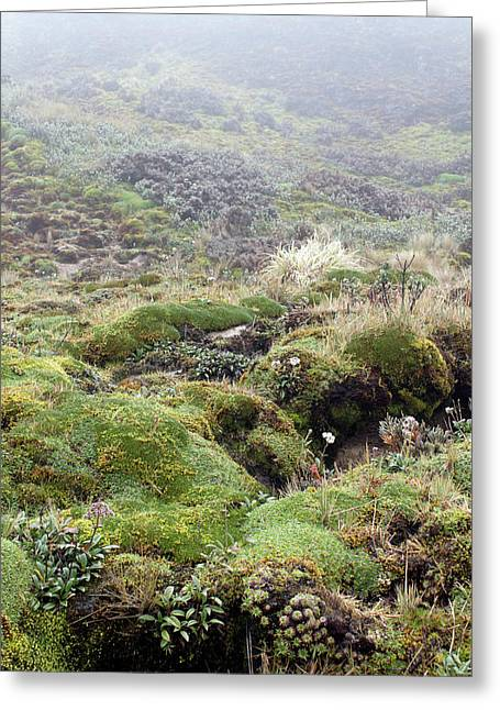 Cushion Plants On Misty Paramo Greeting Card by Dr Morley Read